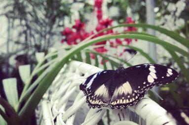 La Casa delle Farfalle: destinazione paradiso